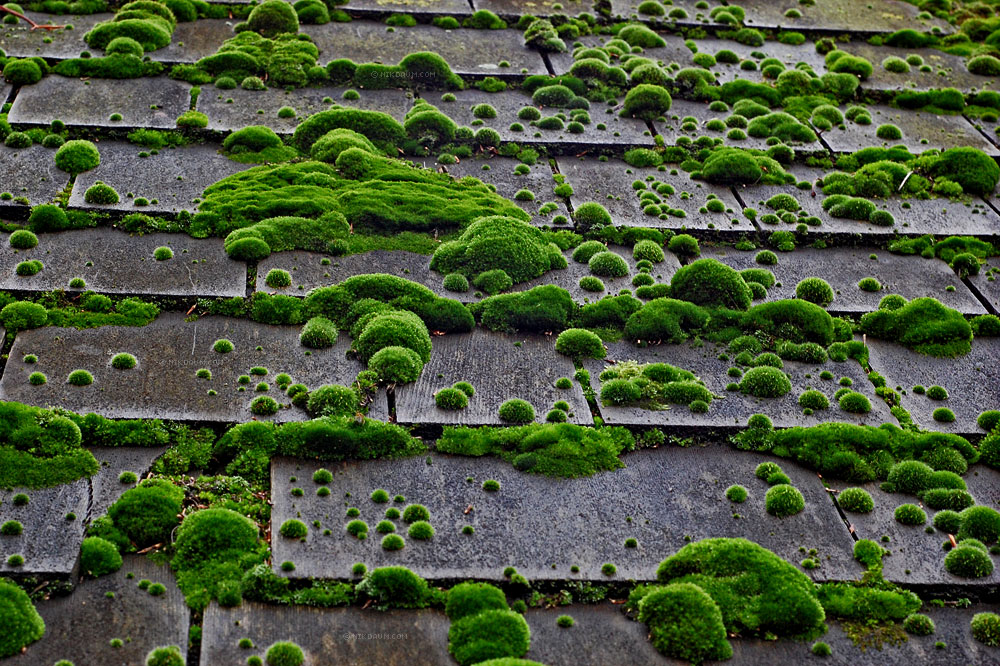 Moss Growing on Your Roof?
